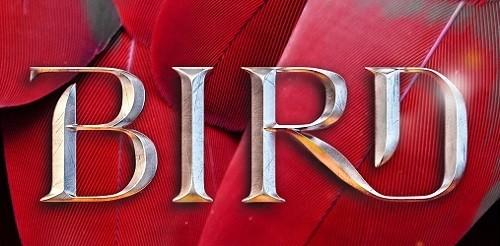 BirdandtheBlade_jkt-final-header