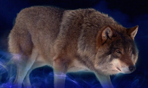 It's live!! Cover Reveal: Wolf Dancer by Rachel M. Raithby + Giveaway (International)