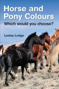 Horse and Pony Colours: Which Would You Choose?